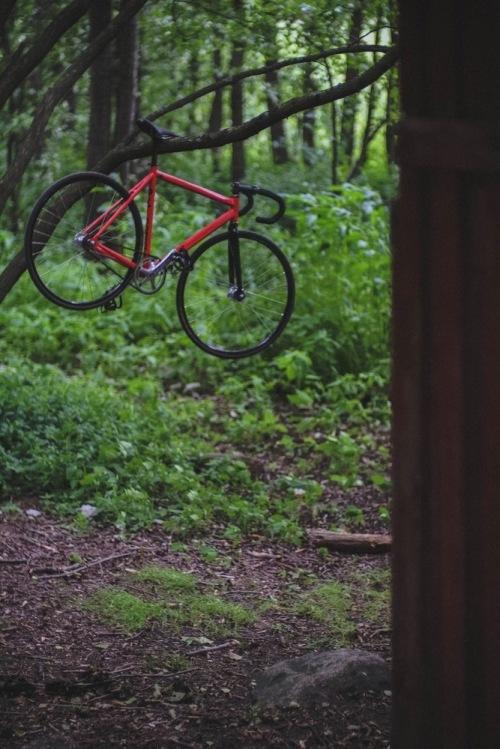 Dodici_woods-25