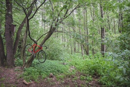 Dodici_woods-27